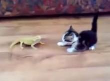トカゲを目の前にして、子猫が構えています
