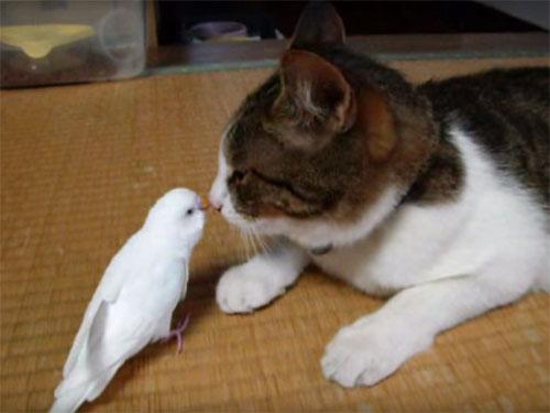 「にゃー」と鳴くインコは、猫と仲良し