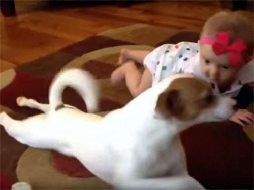 赤ちゃんに、ハイハイを教える犬