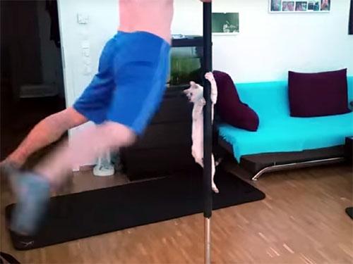 ポールダンスをする猫