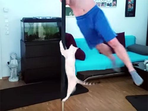 ポールダンスをする凄い猫!