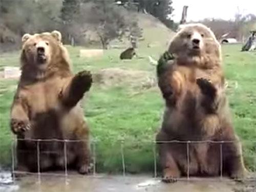 手を振ると応えてくれる熊さん