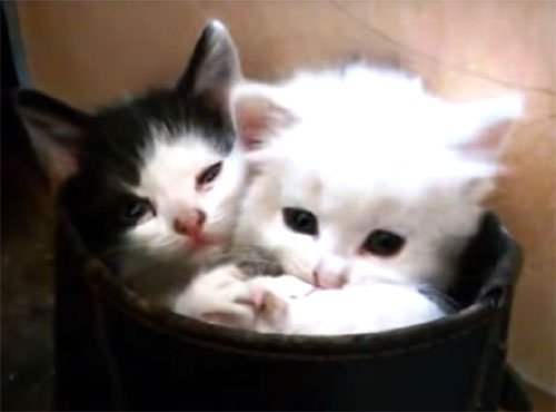 ブーツの中の可愛い子猫たち♪