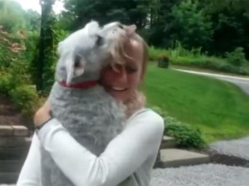 二年ぶりの飼い主との再会に、喜び過ぎて気絶してしまった犬♪ 飼い主さんもびっくり!