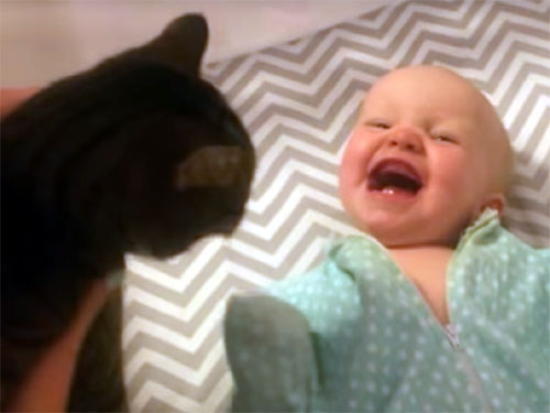 「わお!」赤ちゃんが猫を見て大興奮!
