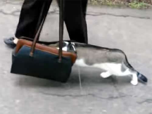 バックに顔を突っ込んで散歩する猫
