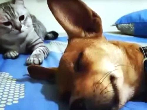 寝ている犬に高速の猫パンチ!
