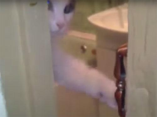 邪魔しないでニャ!とドアを閉める猫