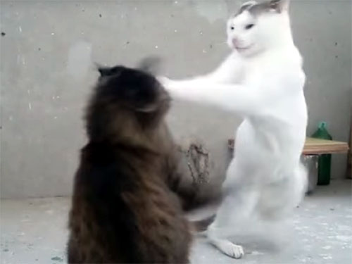 突然、喧嘩を始める猫!