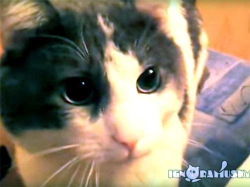 あっという間に瞬間移動する凄い猫!