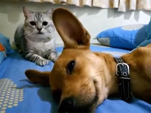 猫パンチをされても、また寝る犬