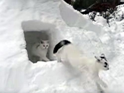 雪で作った「カマクラ」に猫たちも大喜び