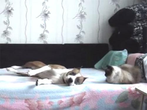 飼い主の留守中にベッドで大はしゃぎの犬