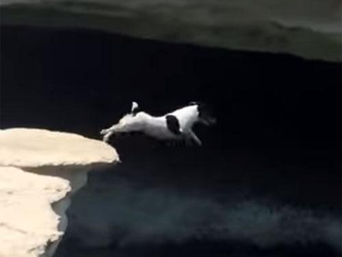 崖から海にダイブするスーパーわんこ!