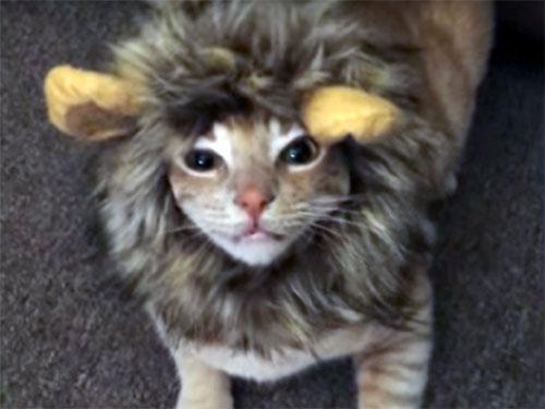 ハロウィーン・コスチュームの犬猫特集
