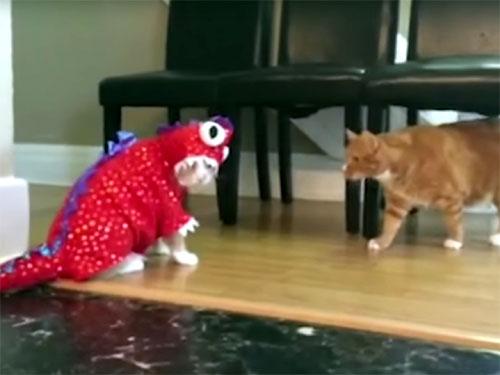 トカゲのコスチュームを着た猫
