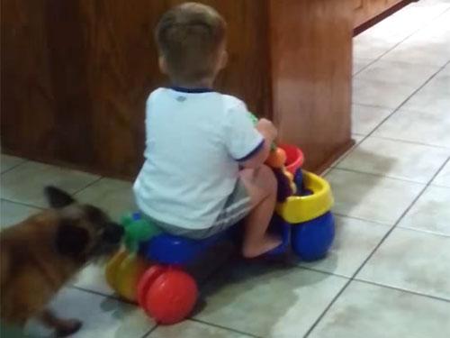 オモチャの車に乗った子供を連れ戻す犬