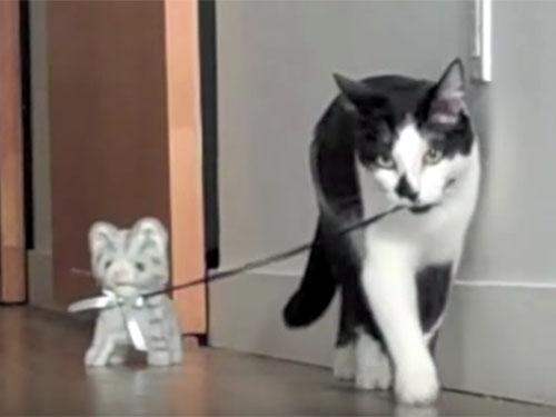 おもちゃの子猫を散歩させる猫