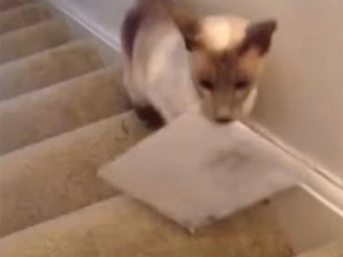 郵便物を運んでくれる猫