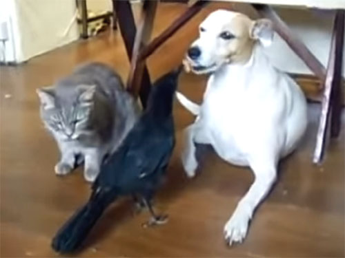 カラスが犬に餌をあげる