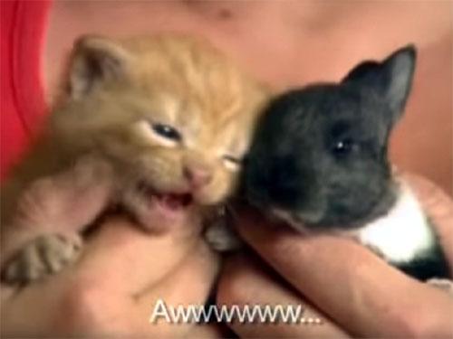 子猫と子ウサギ