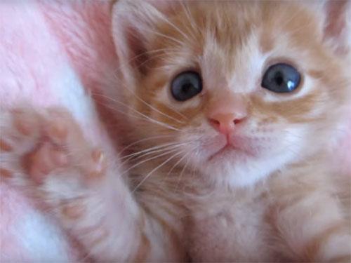 可愛い人気の子猫動画まとめ
