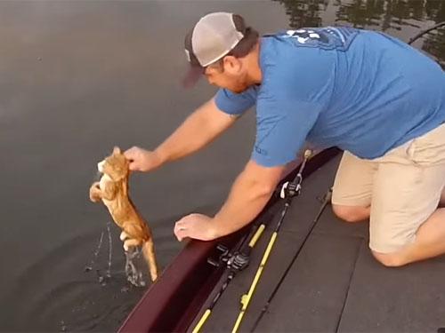 川を泳いできた二匹の子猫を釣り人が救助2