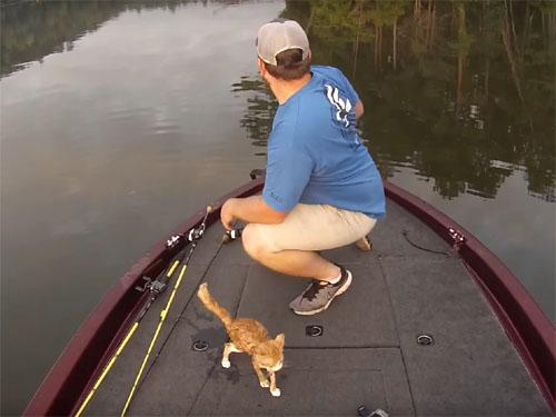 川を泳いできた二匹の子猫を釣り人が救助3