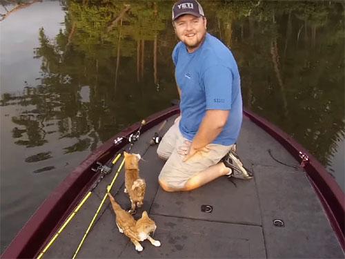川を泳いできた二匹の子猫を釣り人が救助5