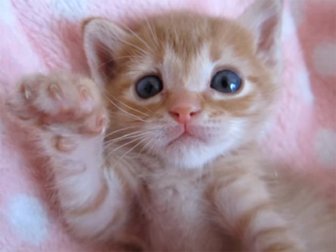 茶トラの可愛い子猫