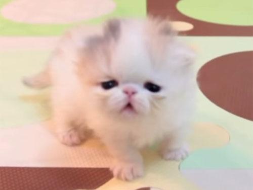 あどけない顔の子猫