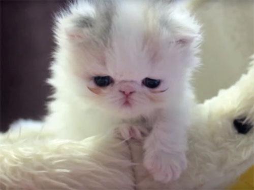 ふわふわした毛並みの子猫
