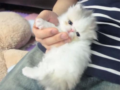甘えている子猫
