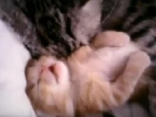 子猫に添い寝している母猫