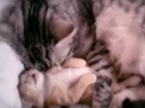 寝ていて急にうなされる子猫
