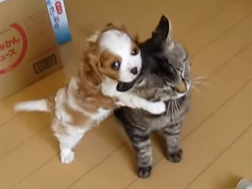 「かんべんしてよぉ~」猫に抱きつく子犬