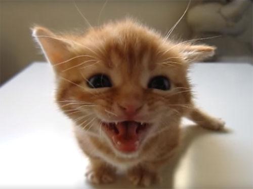 大人の猫に叱られちゃった子猫
