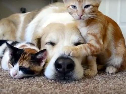 可愛い子猫たちに囲まれて、幸せそうな犬
