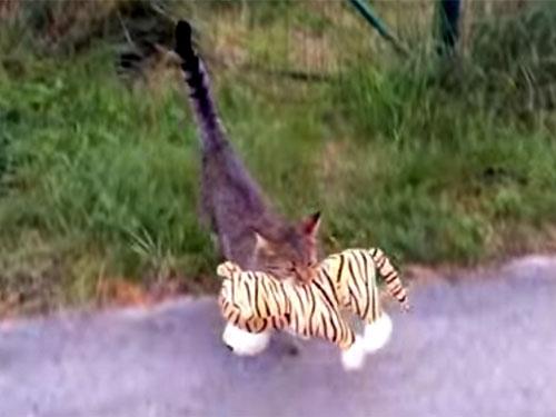 ご近所のトラのぬいぐるみに恋した猫