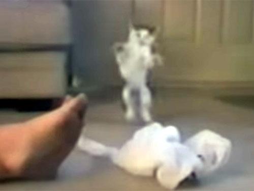 足が臭いにゃ! のけぞって飛び上がる子猫