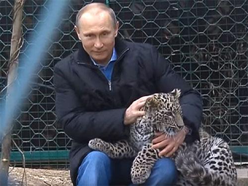 猛獣使いのプーチン大統領! ペルシャヒョウを手なずける♪