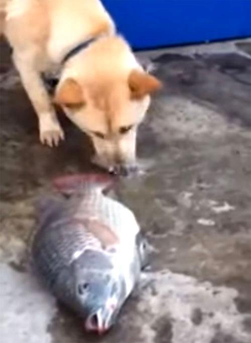 心優しいワンちゃん! 魚に水を掛けて救助