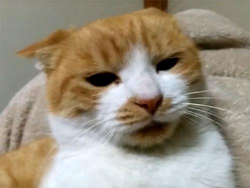 「争いは愚かにゃり!」喧嘩中に何かを悟り落ち込む猫