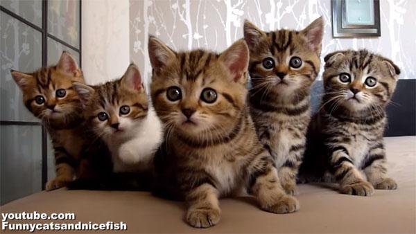 とにかく可愛い! 子猫たちの楽しい聖歌隊♪