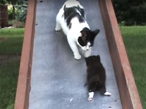 「ママ助けて~!」滑り台からスベり落ちる子猫を救う母猫。でも、また一匹落ちてきた!