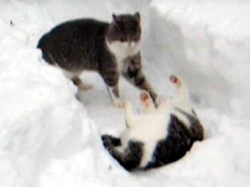 雪の中で遊ぶ猫1