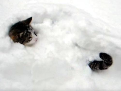 雪の中で遊ぶ猫3