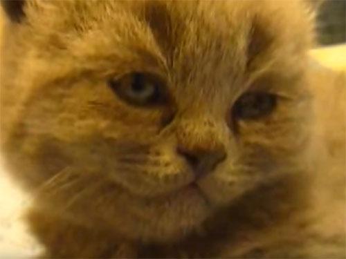 パタン!と、速攻で電池切れする子猫