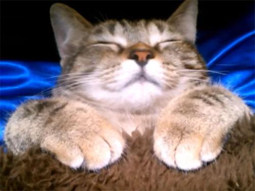「あったかいにゃ~♪」こたつで眠る可愛い子猫