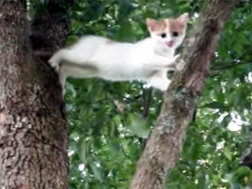 「ママ助けて~」子猫が高い木に登って大ピンチに!